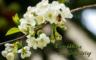 Kirschblüten & mehr